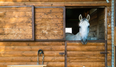 Muss ein Pferdestall in der Nachbarschaft geduldet werden?