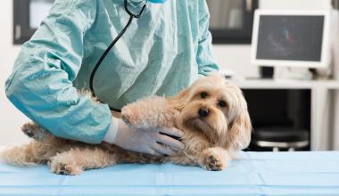 Mit einer Tierkrankenversicherung auf der sicheren Seite