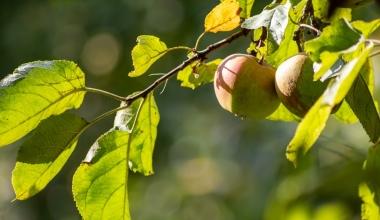 Neue Agrarversicherung für Biobauern und Biowinzer auf dem Markt