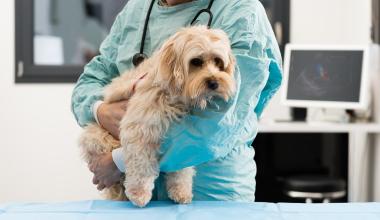 Coya bringt digitalen Tierkrankenschutz