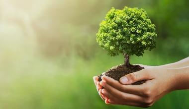 Fokus auf Nachhaltigkeit: Gothaer gründet Stiftung
