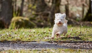 Finanztest prüft Hundehaftpflichtversicherungen