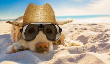 Wenn der Hund mit in den Urlaub fährt