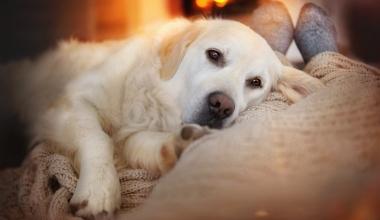 Balunos: Digitale Hundeversicherung vom Assekuradeur ias