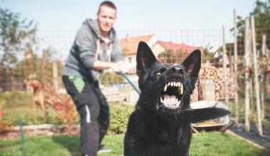 Geteiltes Leid nach Hundebiss