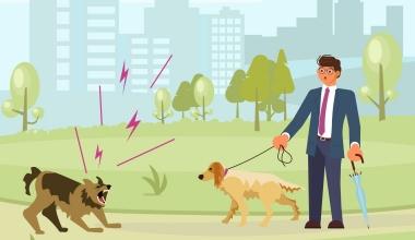 Schadensersatz für Bisse durch den eigenen Hund?