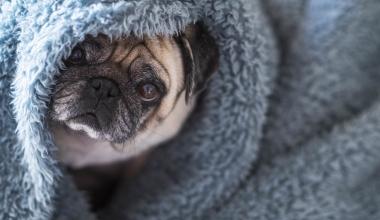 Adam Riese bringt Haftpflichtlösung für Hundehalter