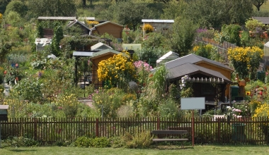 Versicherungsschutz für Kleingärten: Grüne Oasen richtig absichern
