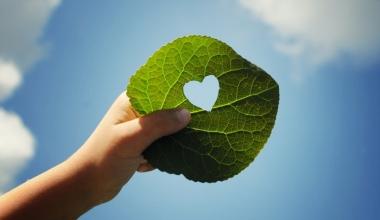 Nachhaltige Versicherungspolicen sind nur nettes Beiwerk – warum eigentlich?