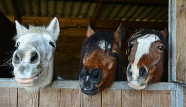 Ascore kürt die besten Pferdehalterhaftpflicht-Tarife