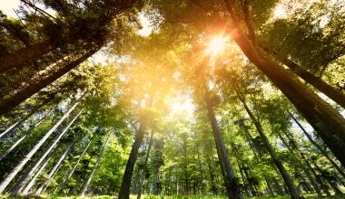 Schwarzwälder Versicherung bringt nachhaltige PHV