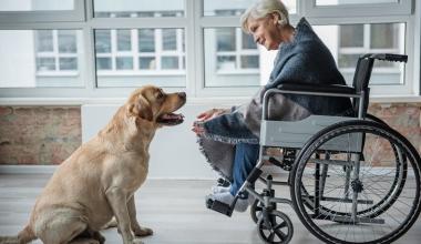 Oberösterreichische überarbeitet Hundehalterhaftpflicht