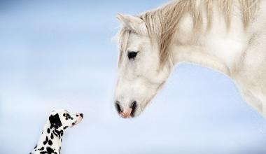 HDI bringt Tierhalterhaftpflicht mit Garantieleistungen