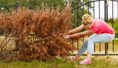 """Sind Baumfällarbeiten als """"Gartenpflege"""" zu verstehen?"""