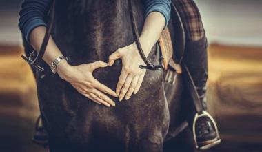 Emotion Pferd: Kundenbindung durch OP- und Krankenversicherungen für Tiere