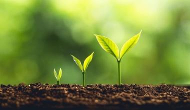 Honorarfinanz setzt Wachstumskurs fort