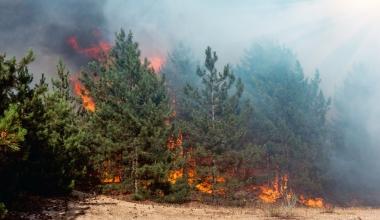 Waldbrand: Wer kommt für Schäden auf?