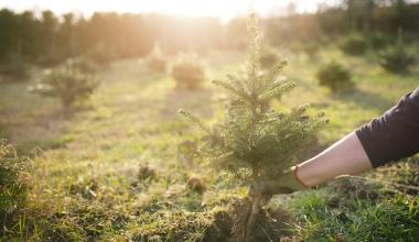 Grunderwerbssteuer: Was ist mit den Weihnachtsbäumen?