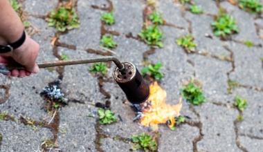Unkrautabflammen: Gebäudeversicherer kann Leistungen kürzen