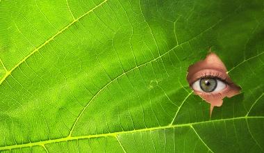 Finanzanlagenvermittler: Grüne haken zur BaFin-Aufsicht nach