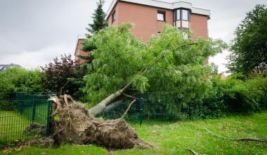 Muss die Wohngebäudeversicherung Kosten für Baumfällung übernehmen?