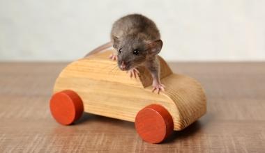Wann zahlt die Teilkasko bei Schäden durch Mäuse?