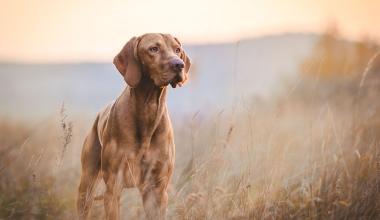 Treibjagd: Wann Hundeführer und Treiber nicht unfallversichert sind