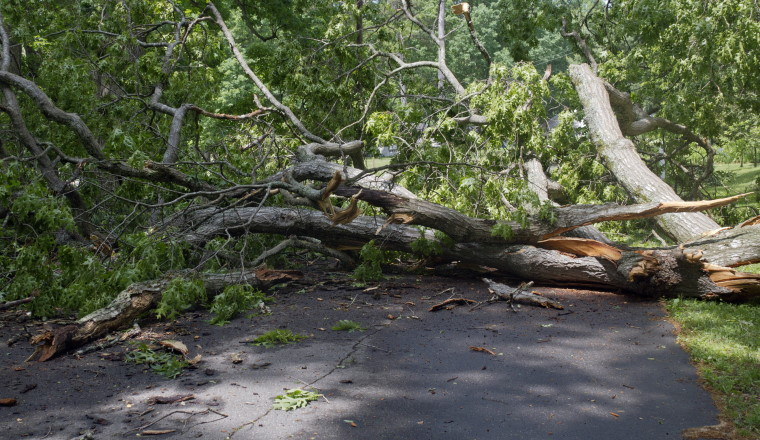 Schadensersatzanspruch für Unfall durch umgestürzten Baum?